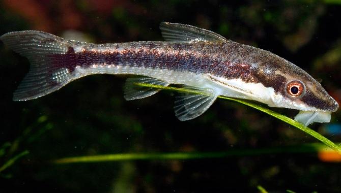 Quels poissons pour un aquarium d 39 eau douce marseille for Nettoyeur aquarium poisson