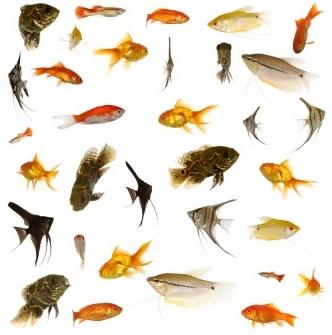 Quels poissons choisir pour son aquarium