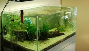 Temp rature trop lev e en t comment faire guide d for Aquarium ouvert