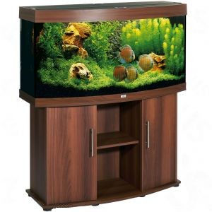 achat de poissons d 39 aquarium guide d 39 achat pour animaux. Black Bedroom Furniture Sets. Home Design Ideas