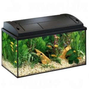 Aquarium guide d 39 achat for Prix poisson aquarium